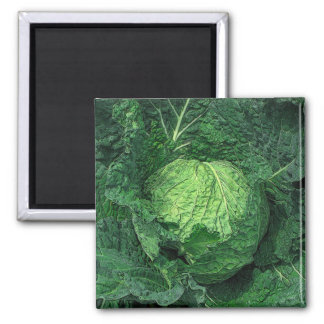 Savoy Cabbage Square Magnet