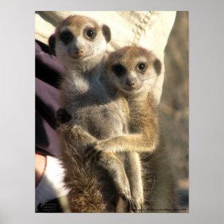 Savuka hugging Oriole - Poster