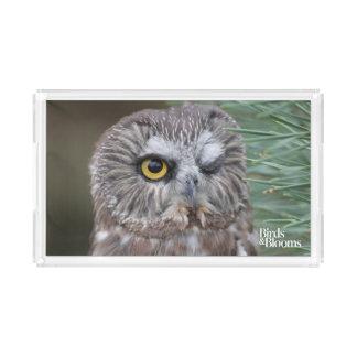Saw-whet Owl Acrylic Tray