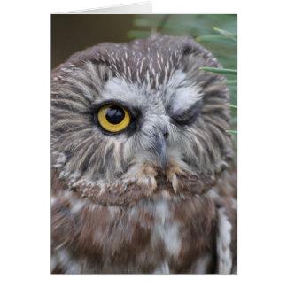 Saw-whet Owl Card