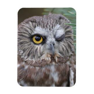 Saw-whet Owl Rectangular Photo Magnet