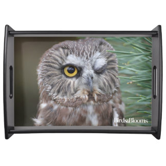 Saw-whet Owl Serving Tray
