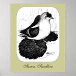 Saxon Swallow Pigeon 1978