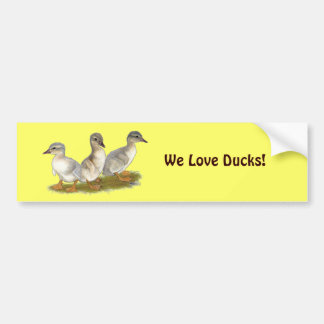 Saxony Ducklings Bumper Sticker