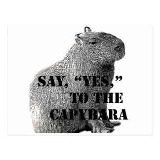 "Say, ""Yes,"" To The Capybara Postcard"