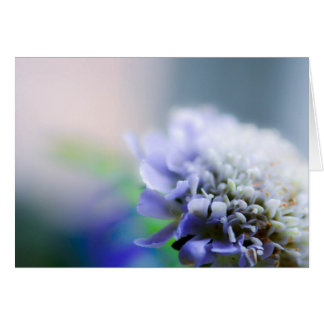 Scabious Card