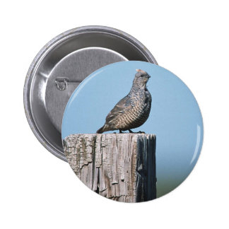 Scaled Quail Pinback Buttons