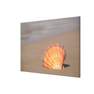 Scallop Shell| Crete, Greece Canvas Print
