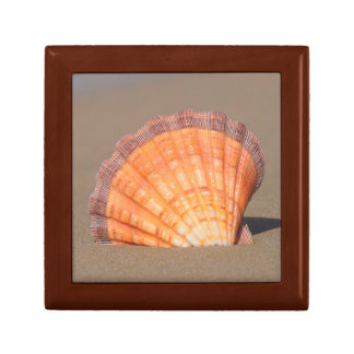 Scallop Shell| Crete, Greece Gift Box