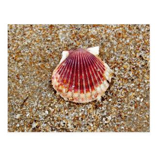 Scallop Shell - postcard