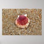 Scallop Shell Print