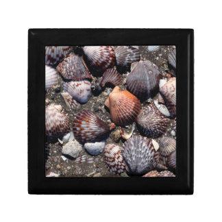 Scalloped Colorful Seashells On A Black Sand Gift Box