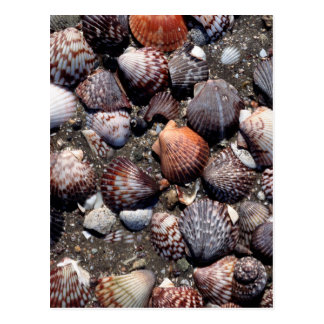 Scalloped Colorful Seashells On A Black Sand Postcard