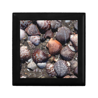 Scalloped Colorful Seashells On A Black Sand Small Square Gift Box