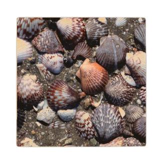 Scalloped Colorful Seashells On A Black Sand Wood Coaster