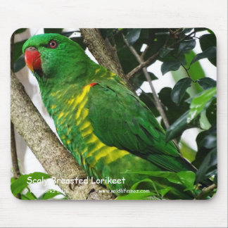 Scaly Breasted Lorikeet Mouse Pad