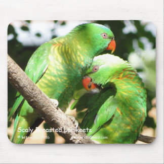 Scaly Breasted Lorikeets Mouse Pad