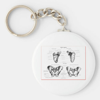 Scapula Pelvis Details Basic Round Button Key Ring