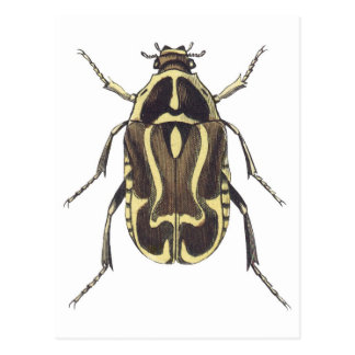 Scarab Beetle Postcard