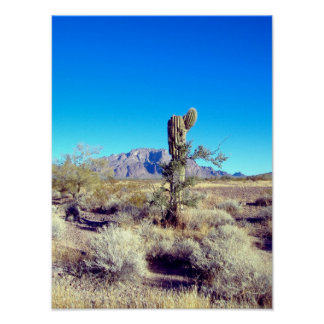 Scarecrow Cactus Poster