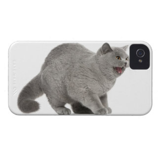 Scared British Shorthair hissing (8 months old) Case-Mate iPhone 4 Cases