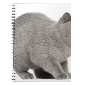 Scared British Shorthair hissing (8 months old) Notebook