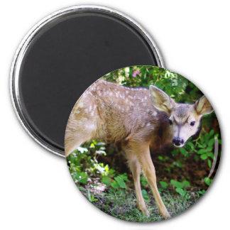 Scared little Deer Magnet