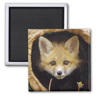 Scared Little Fox Square Magnet