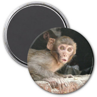 Scared monkey with big eyes 7.5 cm round magnet