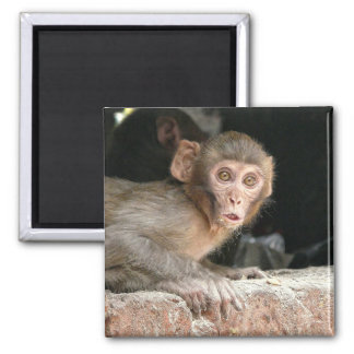 Scared monkey with big eyes square magnet