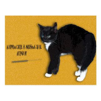 Scaredy Cat Postcard