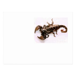Scaremail postcard (Scorpion)