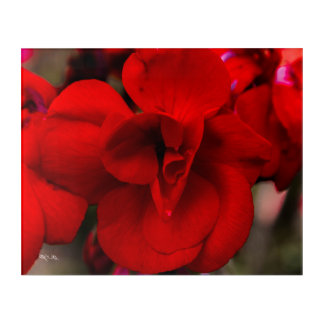 Scarlet Begonias Acrylic Wall Art