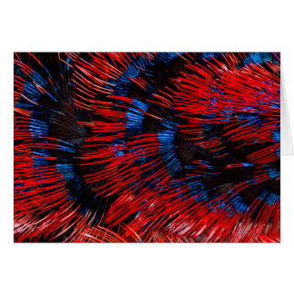 Scarlet-Chested Sunbird Feathers Card