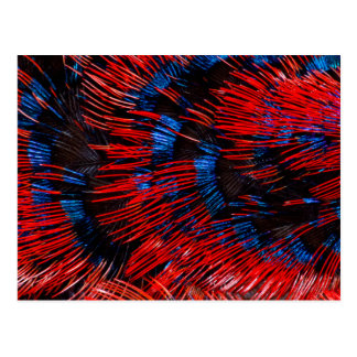 Scarlet-Chested Sunbird Feathers Postcard