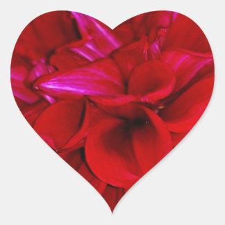 Scarlet Dahlia petals Heart Sticker