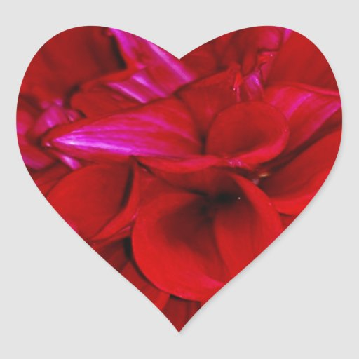 Scarlet Dahlia petals Sticker