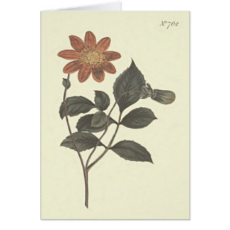 Scarlet Flowered Dahlia Botanical Illustration Card