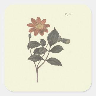 Scarlet Flowered Dahlia Botanical Illustration Square Sticker