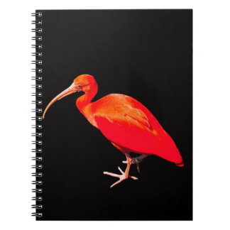 Scarlet Ibis Notebook