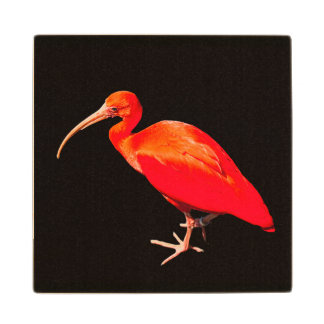 Scarlet Ibis Wood Coaster