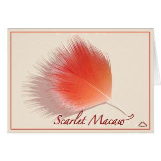 Scarlet macaw - Card