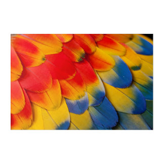 Scarlet Macaw Covert Feathers Acrylic Wall Art