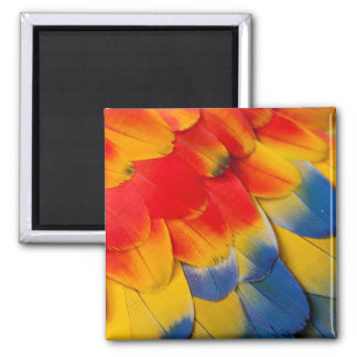 Scarlet Macaw Covert Feathers Magnet