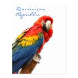 Scarlet Macaw Dominican Republic Postcard