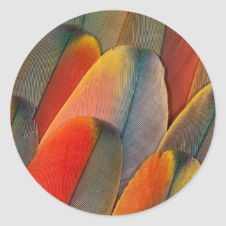 Scarlet Macaw Feather Close-Up Classic Round Sticker