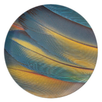 Scarlet Macaw feather close up Plate