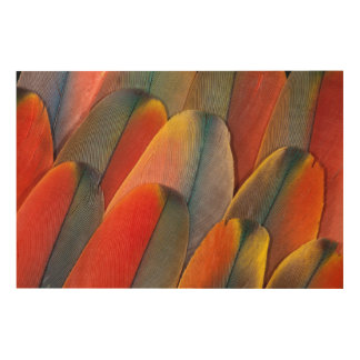 Scarlet Macaw Feather Close-Up Wood Wall Decor