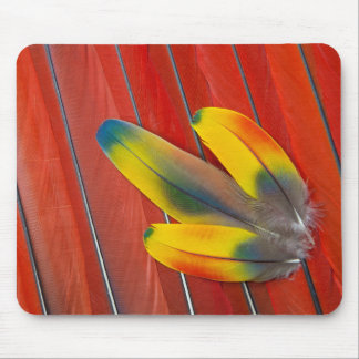 Scarlet Macaw Feather Still Life Mouse Mat