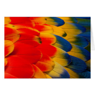 Scarlet Macaw Feathers Card